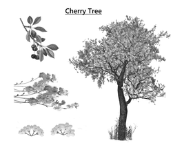 treecherrytree.png