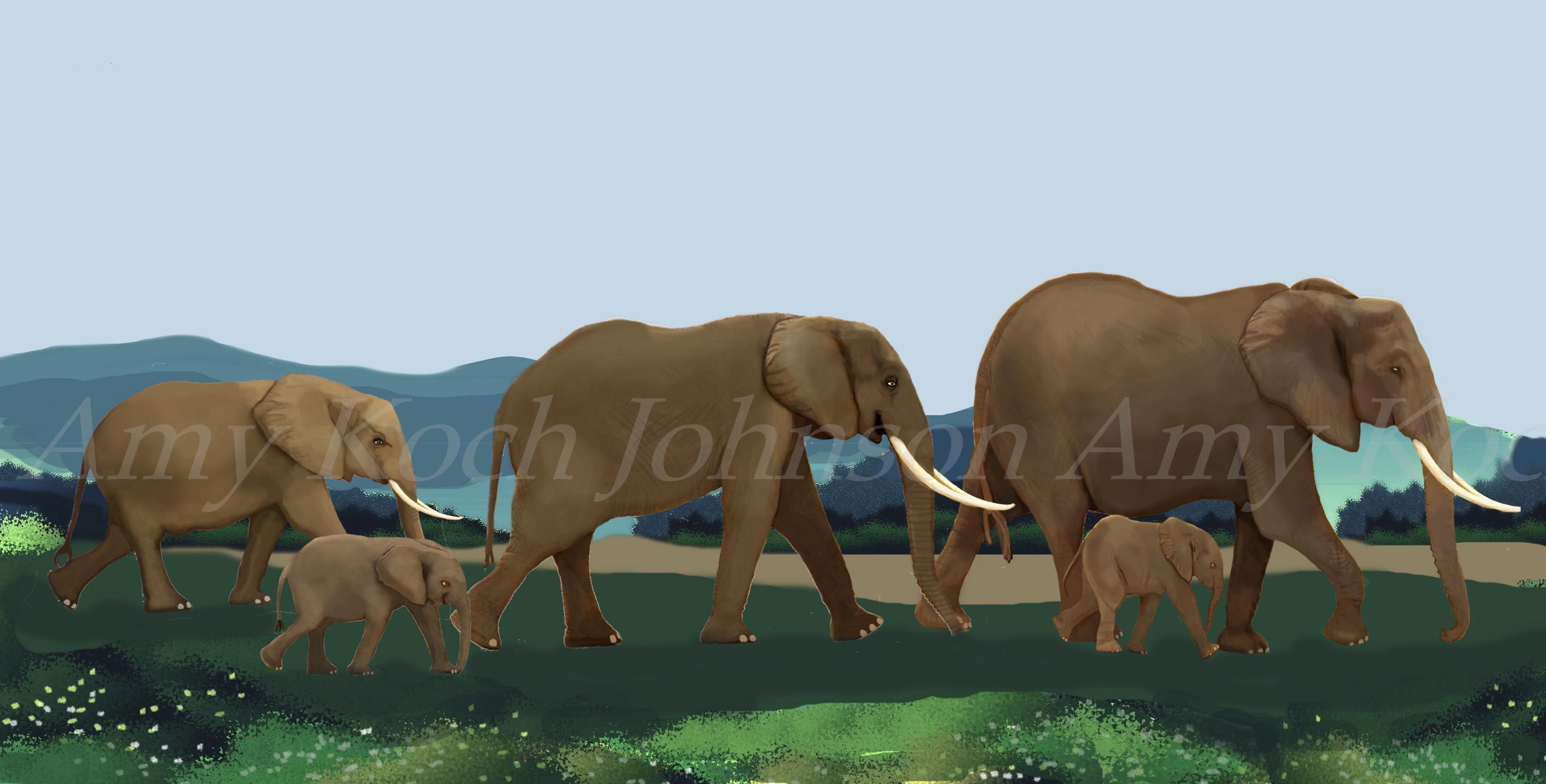 elephantscape-1and2aacopyright
