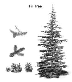 treefirtree.jpg