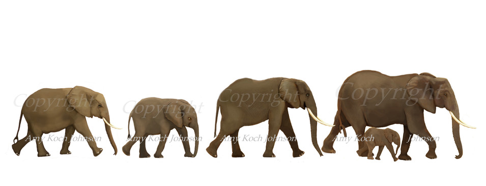 elephantparade1and2toshowcopyright.jpg