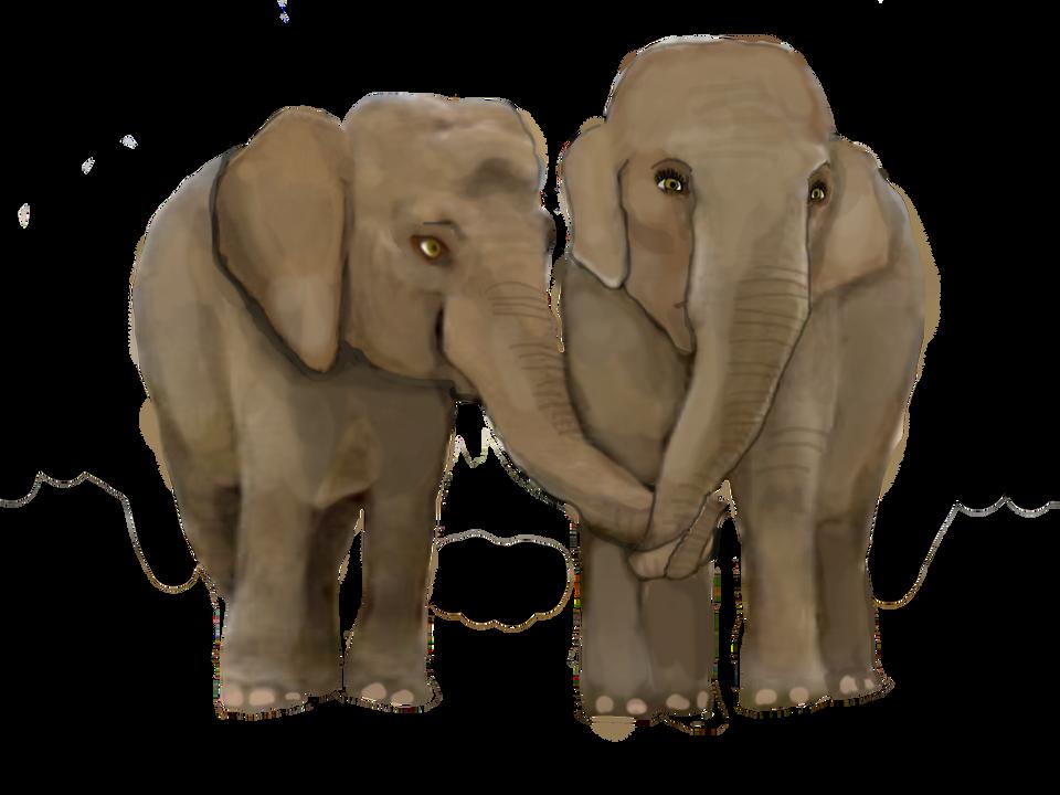 elephant4dfyoung1.png