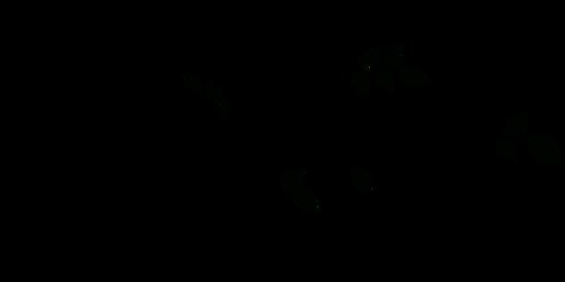 Blackwhitevinevector.png