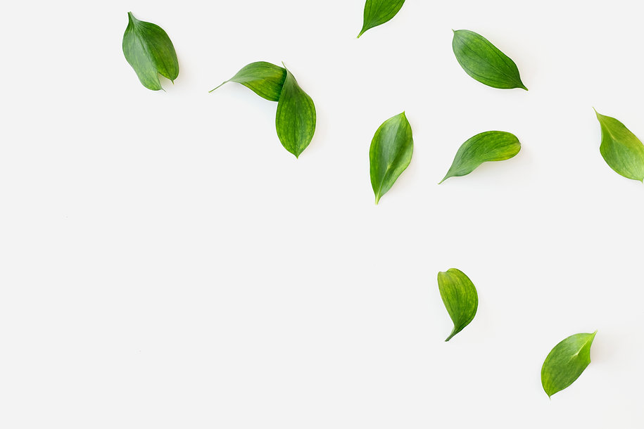 green-leaves-white-background.jpg