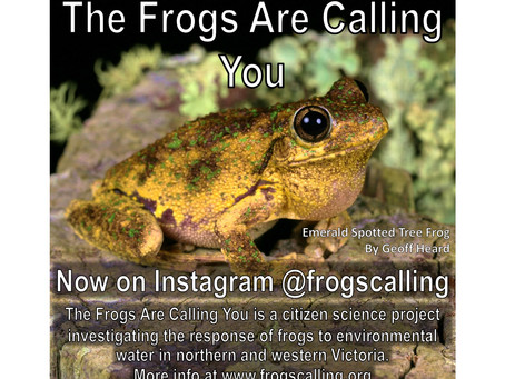 The Frogs Are Calling You is now on Instagram