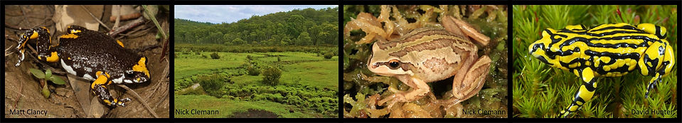 Habitat, Corroboree, Dendy and Alpine La