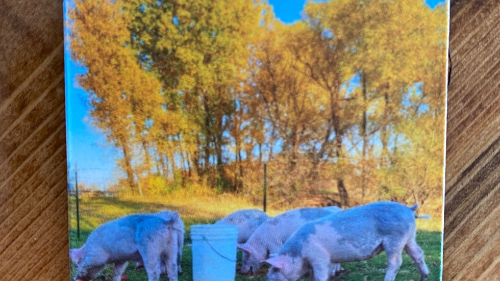 Pastured Pigs Magnet