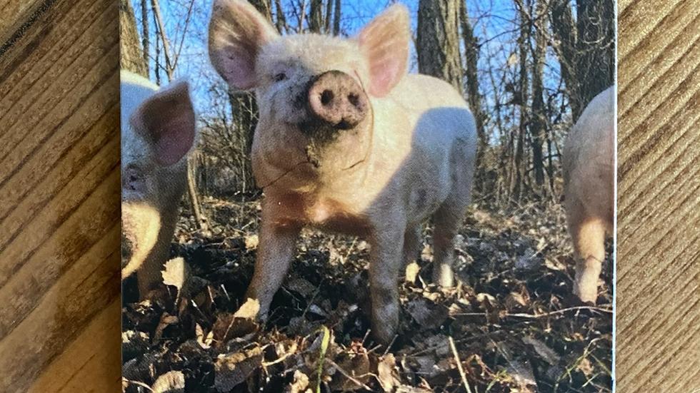 The Pastured Pig Magnet