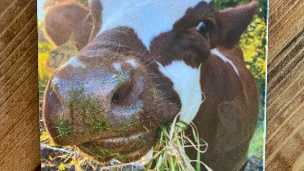 Gertie the Cow Magnet