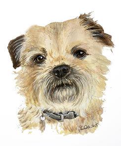 6 Border Terrier - Duke.jpg