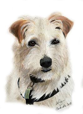 11 Parsan Russell Terrier - Alfie.jpg