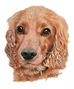5 Cocker Spaniel - Biscuit.jpg