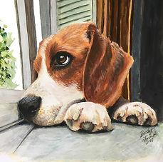 7 Beagle - Brody.jpg