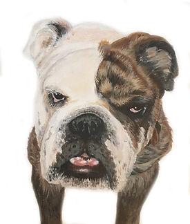 9 Bulldog - Humphrey.jpg
