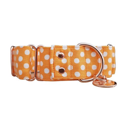 Orange spotty martingale collar