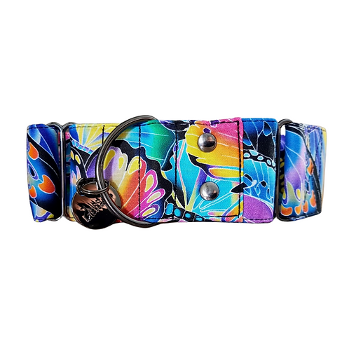 Rainbow butterfly martingale collar