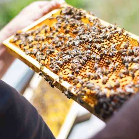 Ag Tips: ENSURING SUCCESS FOR YOUR 2021 POLLINATION