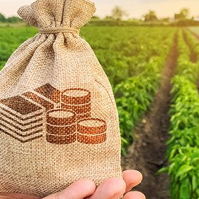 Ag Tips: STRAIGHTENING UP YOUR FINANCIALS FOR 2021