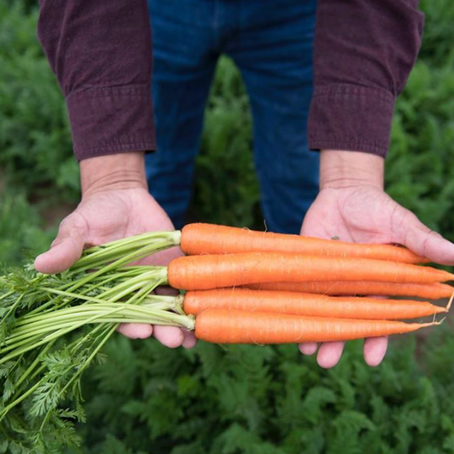 Interview with Grimmway Farms - The Largest Carrot Grower in the World!