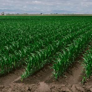 Ag Tips: THE BENEFITS OF SOIL SAMPLING