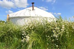 yurt_exterior_flowers