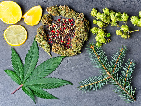 Know Your Cannabis Components:  Terpenes