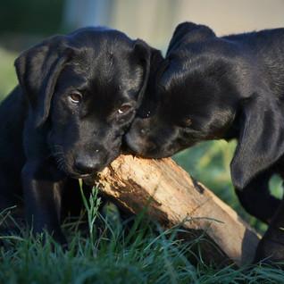 puppy01.jpg