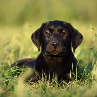 puppy04.jpg