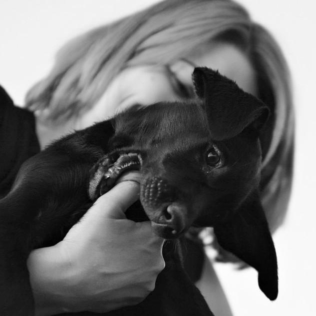 puppy12.jpg