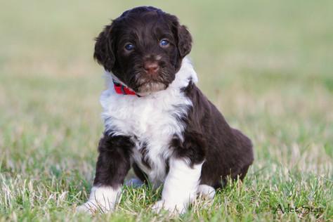 New photos of puppies