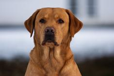 Puppies - litter B