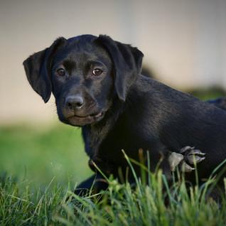 puppy08.jpg