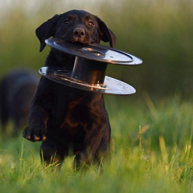 puppy09.jpg