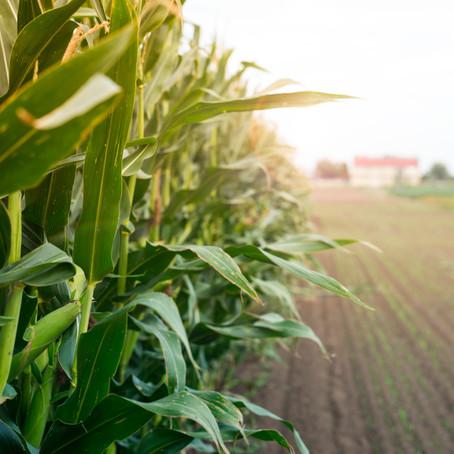 Investigadora elabora fertilizante orgánico con desecho de la industria tortillera