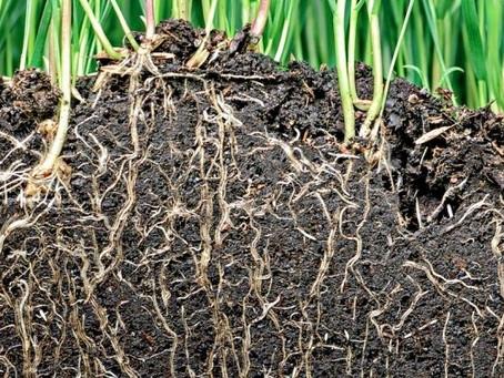 Isn't Soil Moisture Good Enough to Estimate Crop Stress?