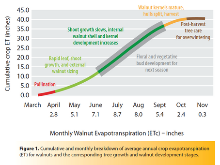 Drought Effects on Walnut and Irrigation Strategies