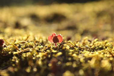 Tiny flower- courtesy of Nikcy Baillie