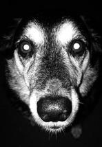 Monty- courtesy of Nikcy Baillie