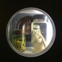 Sample jars- courtesy of Nikcy Baillie