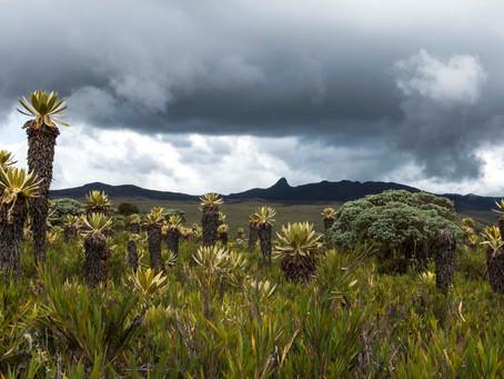 Espacios de vida en Puracé, Cauca