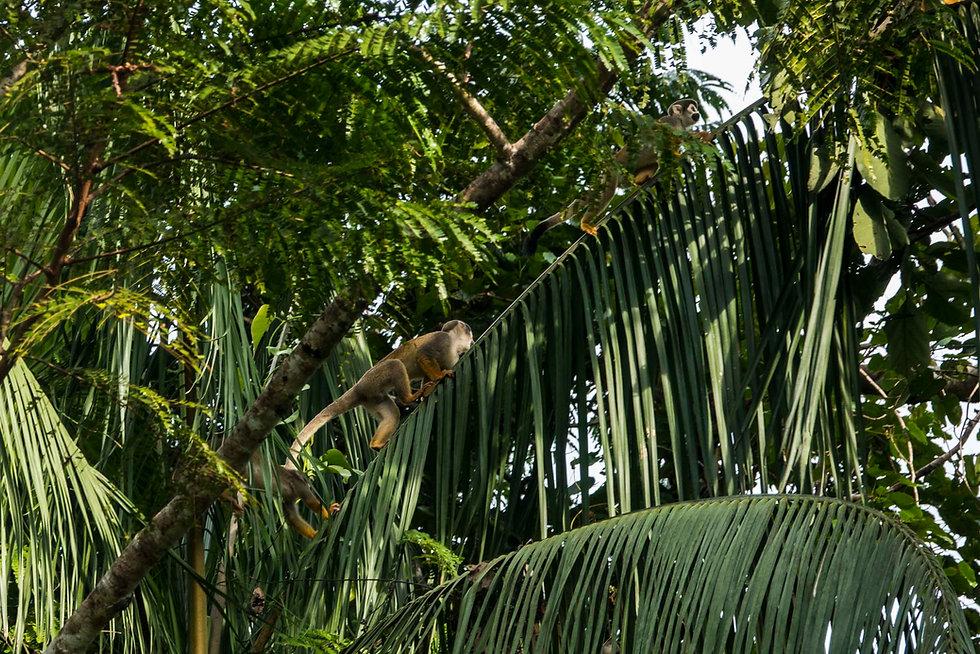 Tarapacá Amazonas, Leonardo Parra 002.j