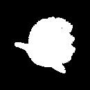 Logo página web_Mesa de trabajo 1.png