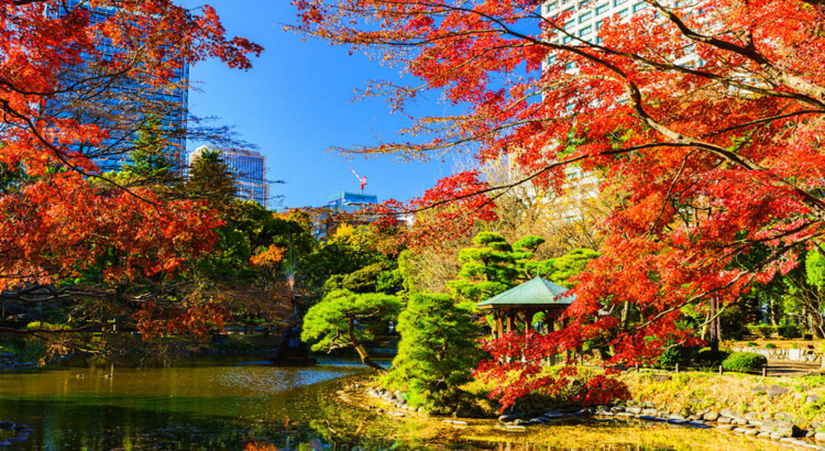 Farbenfroh präsentiert sich Tokio im Herbst