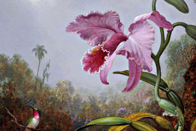 Orchids Abounding