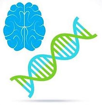заикание генетика.jpg