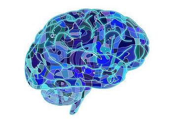 brain-951874_6402.jpg