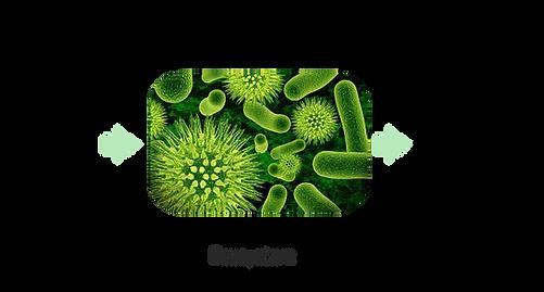 Algae-biofactory-02.png