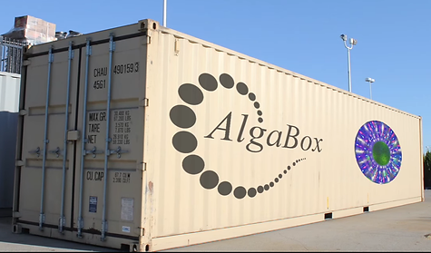 AlgaBox picture.png