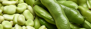 Fava_Product_Ingredients_iStock-11315297