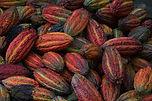 cocoa-3759829.jpg