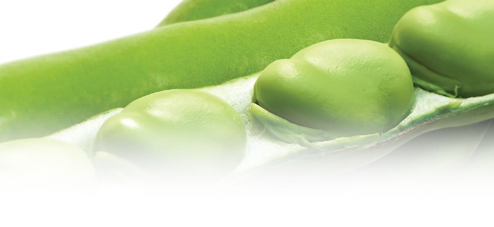 Products_Top Banner_Fava Beans.png